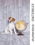 cute small beautiful dog... | Shutterstock . vector #1067338115