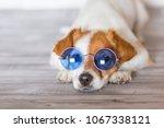 portrait of a beautiful small...   Shutterstock . vector #1067338121