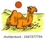 camel in the sunny day   Shutterstock .eps vector #1067377754