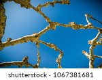 texture repetition of elements... | Shutterstock . vector #1067381681