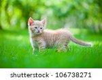 Stock photo little kitten in the garden 106738271