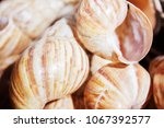 sunny seashells in the black... | Shutterstock . vector #1067392577
