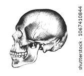 vector engraved style... | Shutterstock .eps vector #1067410844