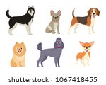 different dogs collection.... | Shutterstock .eps vector #1067418455
