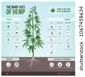 Industrial Hemp Cultivation ...