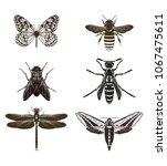 vector set of butterfly... | Shutterstock .eps vector #1067475611