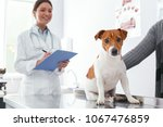 Stock photo dog was brought for inspection to the vet veterinary clinic concept services of a doctor for 1067476859