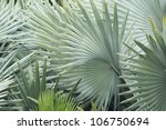 Background Of Palm Leaf With...