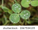 Raindrops From A Spring Shower...