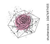 black and white rose flower in...   Shutterstock . vector #1067697455