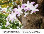 Orchid In Backyard Garden