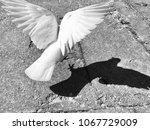 Small photo of white dove with wide wings