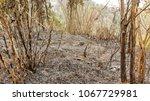 fire forest in summer  natural... | Shutterstock . vector #1067729981