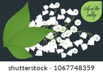 Lily Of The Valley. Vector...