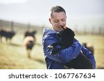 sunny morning on the rural farm.... | Shutterstock . vector #1067767634