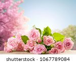 Stock photo pink rose flowers lying on sackcloth and spring trees with sakura blossoming branch against the 1067789084