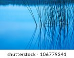 Silhouette Of Reeds Reflected...