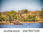 blur in south africa    kruger  ... | Shutterstock . vector #1067837144