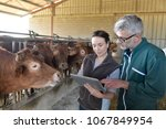 farmer with veterinary in cow... | Shutterstock . vector #1067849954
