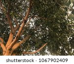 green leaf tree care is... | Shutterstock . vector #1067902409