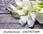 calla lillies flowers bouquet ...   Shutterstock . vector #1067907389