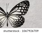 Stock photo butterflies and colorful butterflies 1067926709