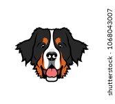 Bernese Mountaing Dog  ...