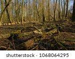 Fallen Tree Trunks On The...