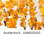 a collection of freshly...   Shutterstock . vector #1068102635