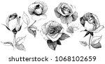 wildflower rose  flower in a... | Shutterstock .eps vector #1068102659