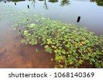 yellow water lily  aquatic...   Shutterstock . vector #1068140369