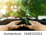 Little child hands take care and plant young seedling on a black soil. Earth day concept. - stock photo