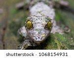 madagascar chameleon... | Shutterstock . vector #1068154931