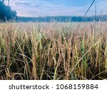 rice sountern morning green... | Shutterstock . vector #1068159884