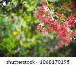 blur background selective soft... | Shutterstock . vector #1068170195