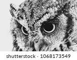 the bureaucratic owl  also... | Shutterstock . vector #1068173549