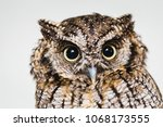 Small photo of photo in macro and high resolution of an owl, baby owl in high quality, raptor, owl is a beautiful night bird