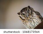 photo of an owl in macro... | Shutterstock . vector #1068173564