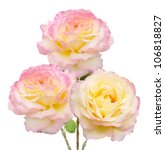 Tea Roses Bunch Isolated On...