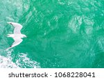 Small photo of Bird flies over the sea. Flying seagulls, top view silhouette. Seagulls hover over deep blue sea. Gull hunting down fish. Gull over boundless expanse air. Copy space for your text.