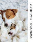 mama dog sleeping and hugging... | Shutterstock . vector #1068288515