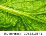 spinach macro photo   macro... | Shutterstock . vector #1068310541
