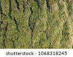 Moss Covered Oak Tree Bark...