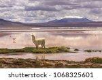 llama at the colorada lagoon ...   Shutterstock . vector #1068325601