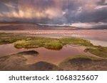 flamingos on the colorado... | Shutterstock . vector #1068325607