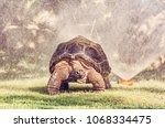 galapagos giant tortoise and... | Shutterstock . vector #1068334475