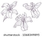 hand drawn dark lilac lily.... | Shutterstock .eps vector #1068349895