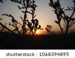 grass and sun  evening sky. | Shutterstock . vector #1068394895