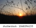 grass and sun  evening sky. | Shutterstock . vector #1068396155