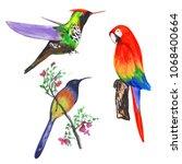tropical bright birdies in... | Shutterstock . vector #1068400664